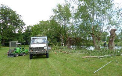 Pollarding Willow Trees in Oxford