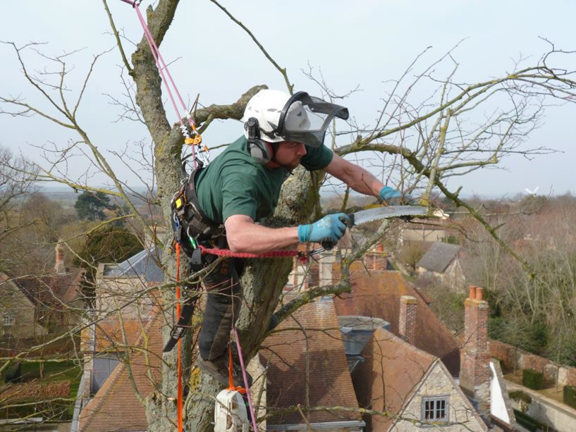 Tree Surgery Work in Long Crendon, Bucks