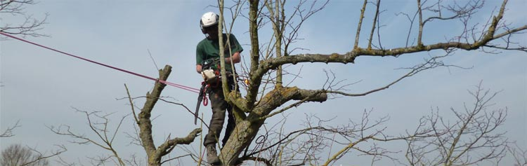 Tree pruning wheatley