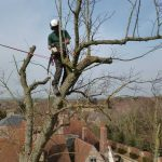 Tree service being completed in Bicester and Wallingford