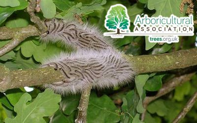 Arboricultural Association's Approved OPM Specialists