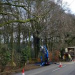 roadside tree servicing oxfordshire