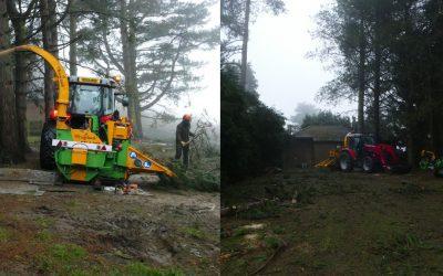 Tree Removal Headington