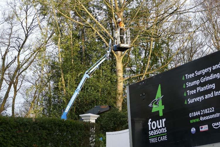 tree removal aylesbury