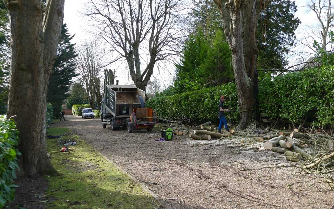 Tree Surgery in Aylesbury