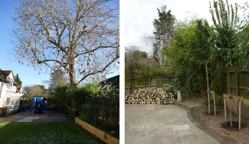 Tree preservation order in Long Crendon