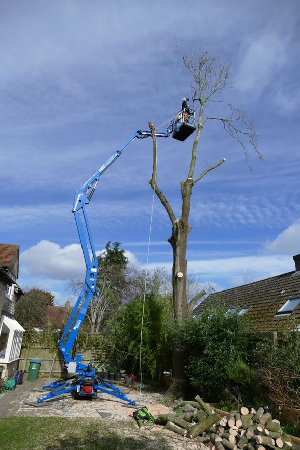 Tree removal with tree preservation order in Long Crendon