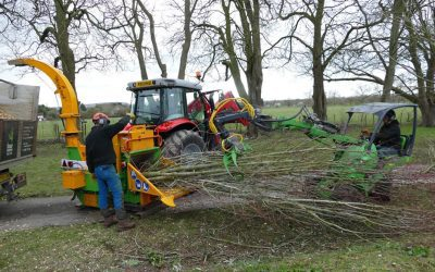 Tree Felling and Removal near Princes Risborough