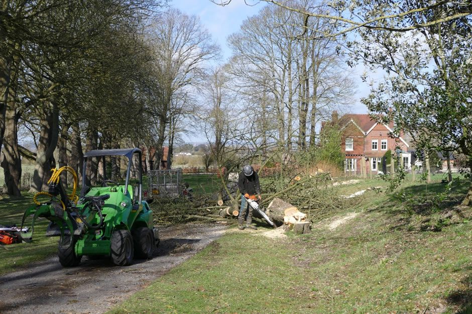 Tree felling and clearance in Princes Risborough
