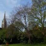 Tree pruning in Marlow