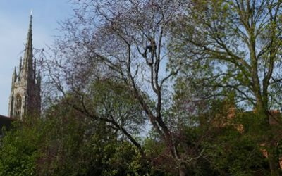 Expert Pruning for Champion Judas Tree in Marlow