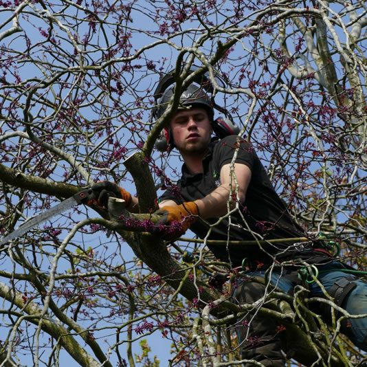 Tree pruning in Marlow, South Oxfordshire