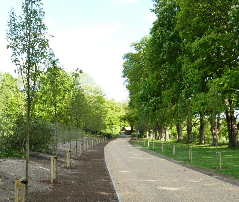 Planting To Create Beautiful Tree Lined Avenue At A Property Near Thame