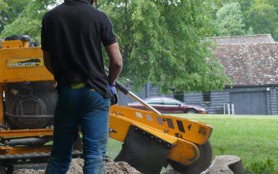 Beech Tree Stump Removal In Watlington