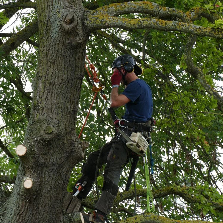Tree Felling & Clearance Oxfordshire