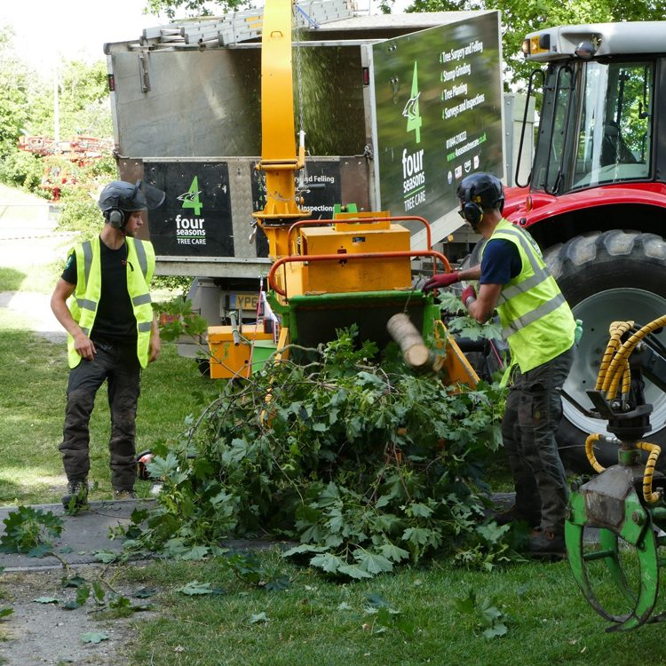Tree Felling & Clearance South Oxfordshire
