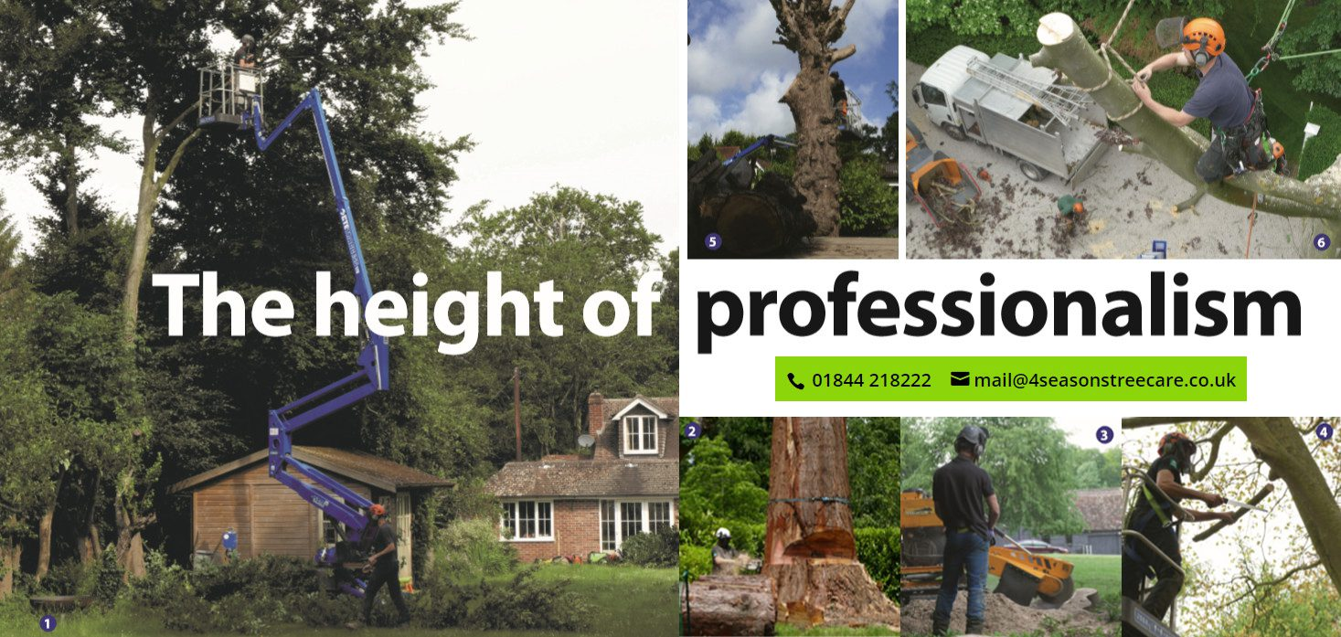Tree Felling Thame - Thame Out Magazine