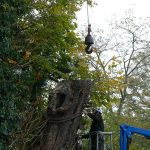 Tree Felling in Thame, Oxfordshire
