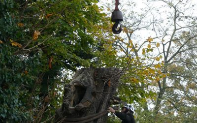 Removal of Large Dead and Dangerous Tree in Thame, Oxon