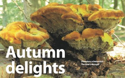 Autumn Delights Of Tree Fungi