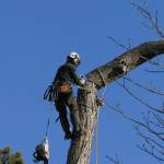 Tree removal Oxford