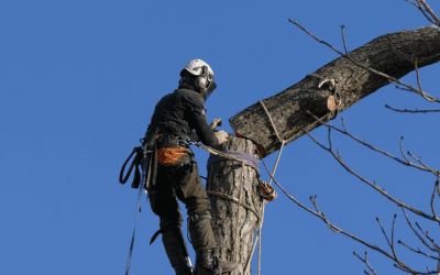 Tree Felling & Removal Work In Oxford
