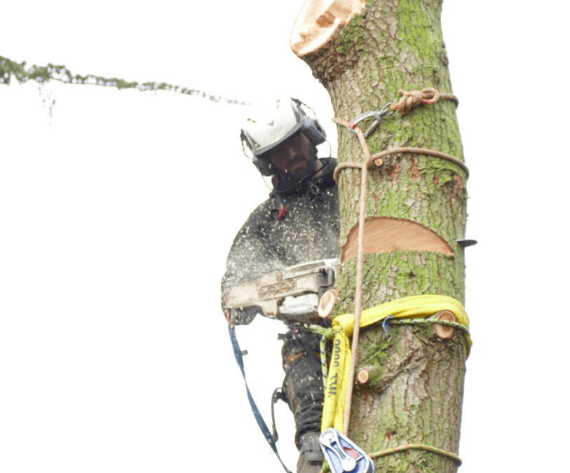 Tree Felling In Aylesbury & Abingdon