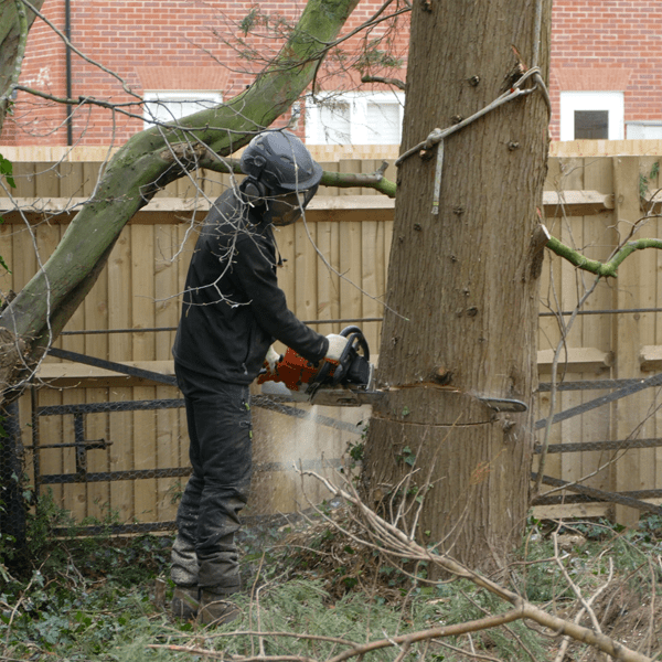Tree Surgery & Removal Work In Oxford