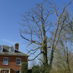 garden tree shaping and surgery Thame