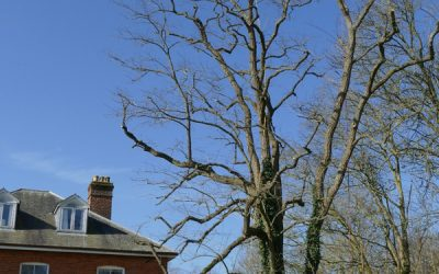 Garden Tree Shaping & Surgery In Thame