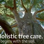 Thame Out holistic tree care