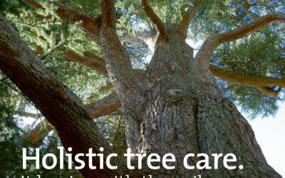 Holistic Tree Care – Thame Out
