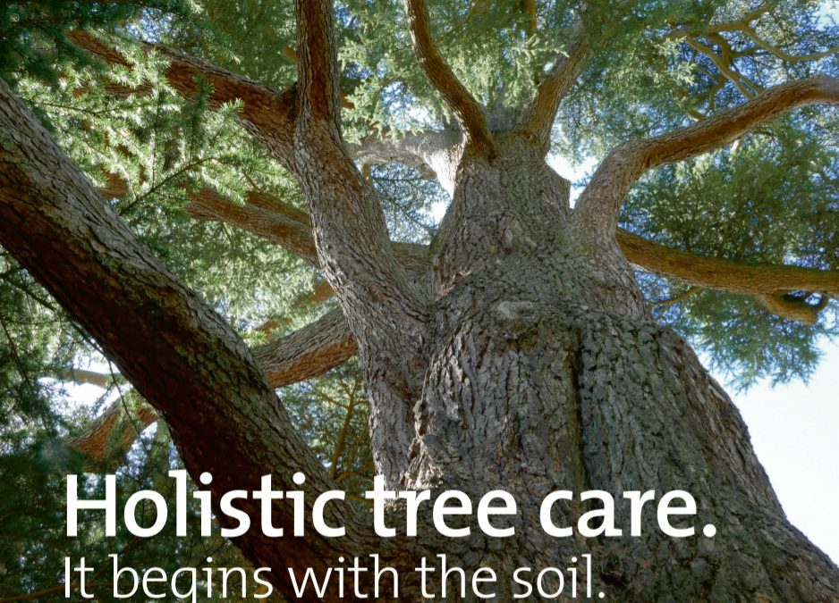 Holistic Tree Care – Thame Out
