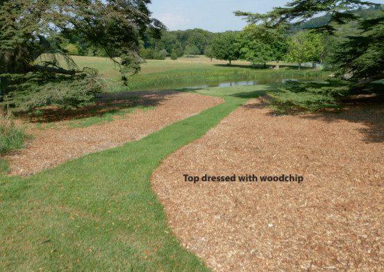holistic tree care 4 seasons