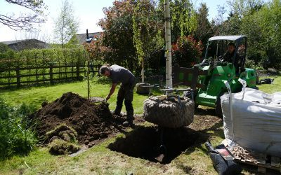 Garden Tree Planting In Thame, Oxon