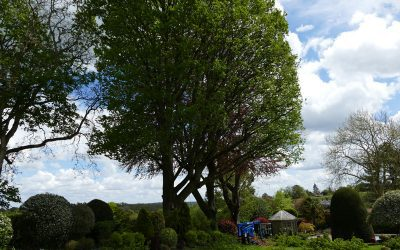 Pruning oak & beech trees to remove low branches and open the view from garden in South Bucks