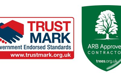 Approved, Recommended and Reviewed Tree Surgery Company in Thame OX9