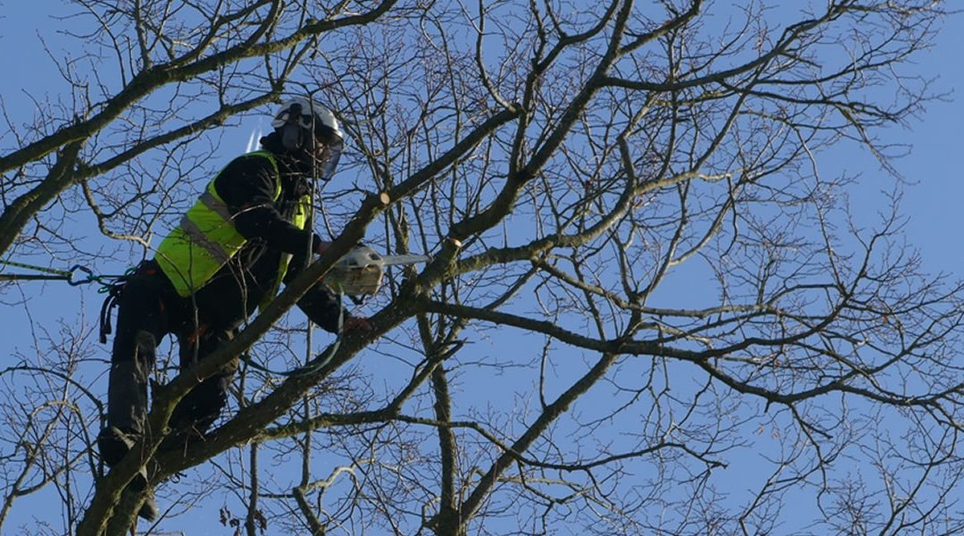 Tree Surgery, Crown Reduction and Pruning Work in Oxford Area