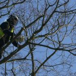 Crown reduction and pruning in Oxford
