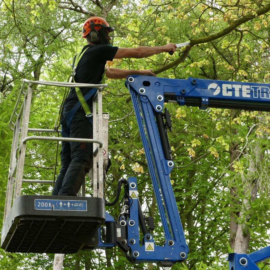 Tree pruning in Oxford